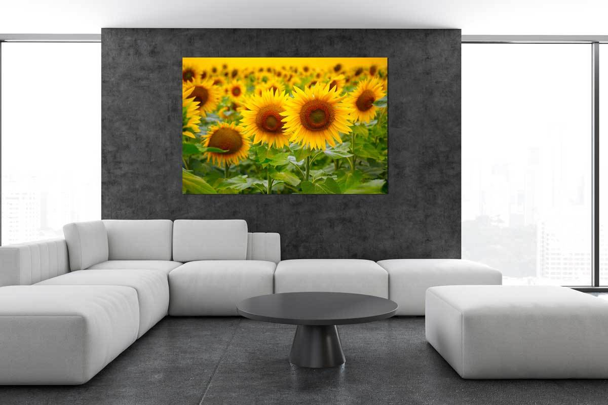 Leinwandbild Sonnenblume